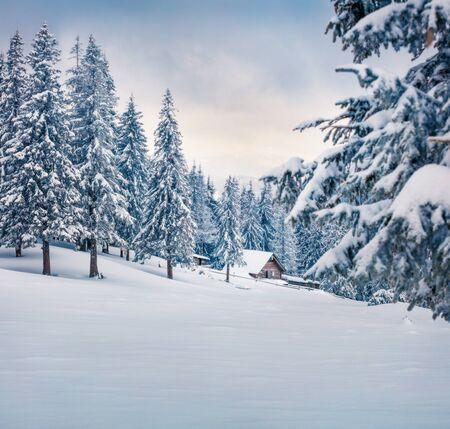 Frosty winter morning in Carpathian mountains with snow covered fir trees. Dramatic outdoor scene, Happy New Year celebration concept. Beauty of nature concept background.