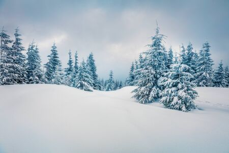 Splendid winter morning in mountain foresty with snow covered fir trees. Dramatic outdoor scene, Happy New Year celebration concept. Artistic style post processed photo. Orton Effect. Standard-Bild