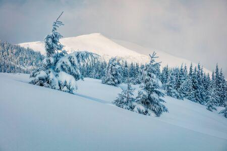 Inverno innevato vista della montagna con abeti innevati, Carpazi, Ucraina, Europa. Scena all'aperto da sogno, concetto di celebrazione di felice anno nuovo. Effetto Orton. Archivio Fotografico