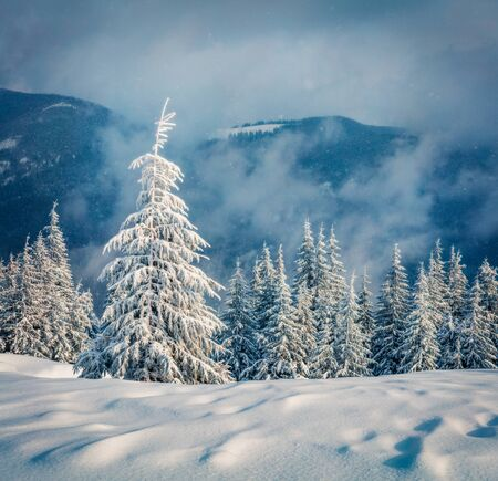 Dramatic winter morning in Carpathian mountains with snow covered fir trees. Snowy outdoor scene, Happy New Year celebration concept. Artistic style post processed photo. Orton Effect. Stock fotó