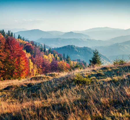 Fabulous autumn scene of Carpathians. Exciting morning view of mountain valley, Ukraine, Europe. Beauty of nature concept background. Zdjęcie Seryjne