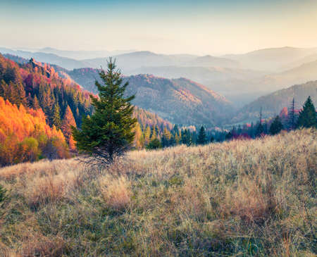 Mystical autumn scene of Carpathians. Picturesque morning view of mountain valley, Ukraine, Europe. Beauty of nature concept background.