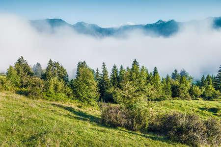 Foggy summer scene of Triglav national park, Bohinj lake location. Sunny morning view of Julian Alps, Slovenia, Europe. Beauty of nature concept background.