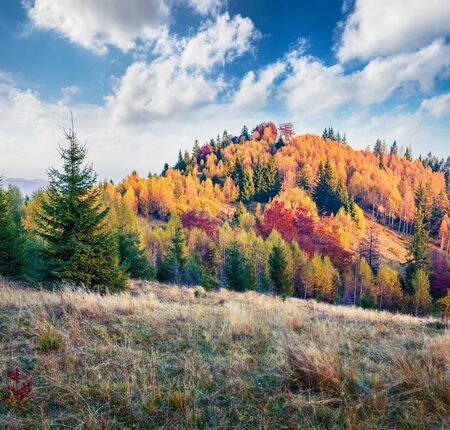 Spectacular autumn scene of Carpathians. Picturesque morning view of mountain valley, Ukraine, Europe. Beauty of nature concept background. Artistic style post processed photo.