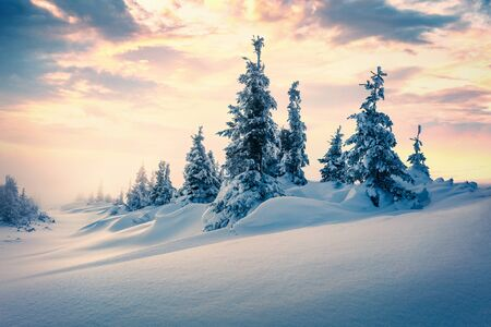 Foggy winter sunrise in Carpathian mountains with snow covered fir trees. Incredible morning scene of mountain forest. Beauty of nature concept background.