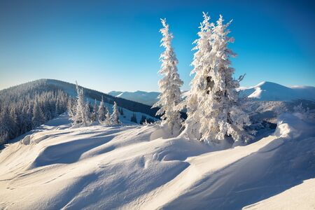 Sunny morning scene in the mountain forest. Bright winter landscape of Carpathian mountains. Beauty of nature concept background.