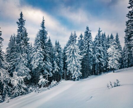 Cold winter morning in Carpathian mountains with snow covered fir trees. Dramatic outdoor scene, Happy New Year celebration concept. Beauty of nature concept background.