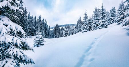 Panoramic winter view of mountain forest with snow covered fir trees. Wonderful outdoor scene, Happy New Year celebration concept. Beauty of nature concept background.