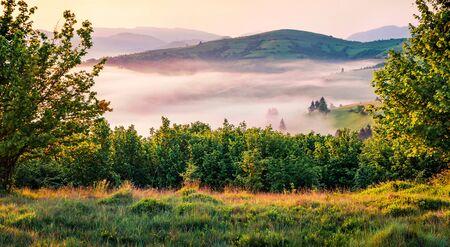Sunny morning view of Carpathian mountains. Picturesque summer sunrise in Borzhava ridge, Transcarpathian, Ukraine, Europe. Beauty of nature concept background.  Stok Fotoğraf