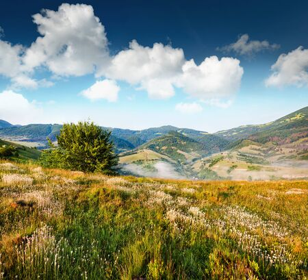 Splendid summer scene of mountain valley. Sunny view of Carpathian mountains. Foggy lanfscape of Borzhava ridge, Ukraine, Europe. Beauty of nature concept background.