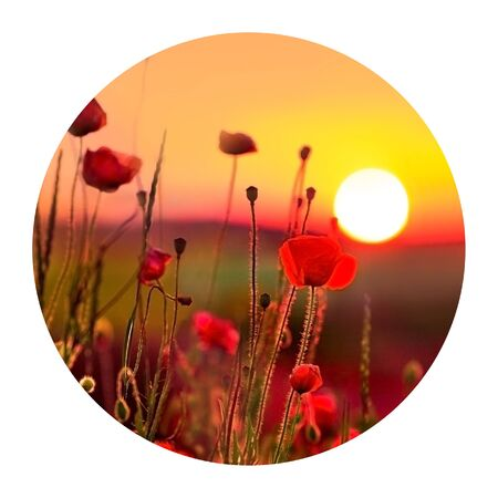 Round icon of nature with poppies on sunrise. Fantastic spring scene of the booming flowers. Photography in a circle.