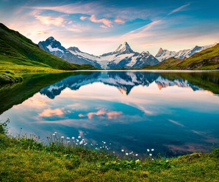 Blooming white tiny flowers on the shore of lake. Nice morning view of Bachalp lake (Bachalpsee), Switzerland. Wonderful summer scene of Swiss alps, Grindelwald, Bernese Oberland, Europe.