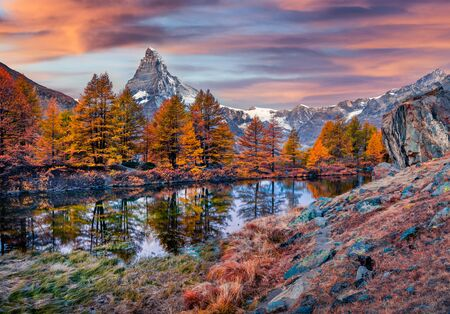 Scented larch on Grindjisee lake, Swiss Alps, Zermatt resort location, Switzerland, Europe. Gorgeous autumn sunrise with Matterhorn (Cervino) peak on background.