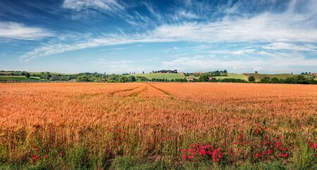 Adorable Tuscan view of field of wheat, Italy, Europe. Sunny summer scene of Italian countryside. Traveling concept background.