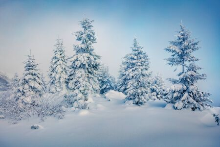 Misty morning view of mountain forest. Fabulous outdoor scene with fir trees covered of fresh snow. Beautiful winter landscape. Happy New Year celebration concept.