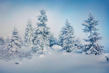 Nebelhafter Morgenblick auf den Bergwald. Fabelhafte Outdoor-Szene mit Tannen mit frischem Schnee bedeckt. Schöne Winterlandschaft. Frohes neues Jahr-Feier-Konzept.
