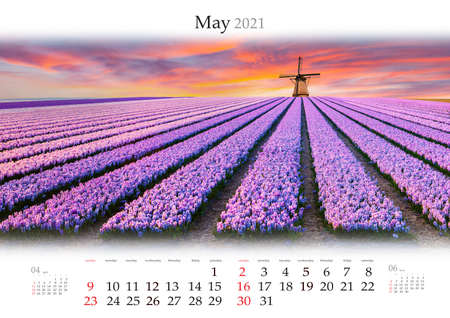 Calendar May 2021, B3 size. Set of calendars with amazing landscapes. Colorful spring scene on flowers farm in Netherlands, Europe. Fields of blooming hyacinth flowers with windmill. Stock Photo