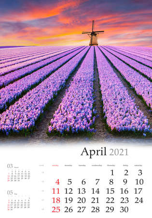 Calendar April 2021, vertical B3 size. Set of calendars with amazing landscapes. Spectacular spring view of tulips farm with windmill on background. Colorful sunset in Netherlands, Europe.