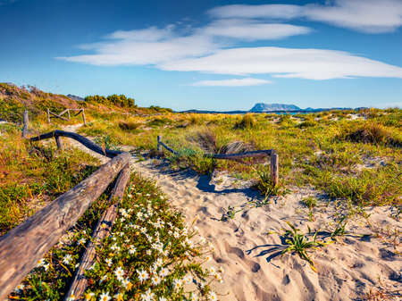 Astonishing spring view La Cinta beach with Tavolara island on background. Fresh green scene of Sardinia island, Italy, Europe. Beauty of nature concept background.