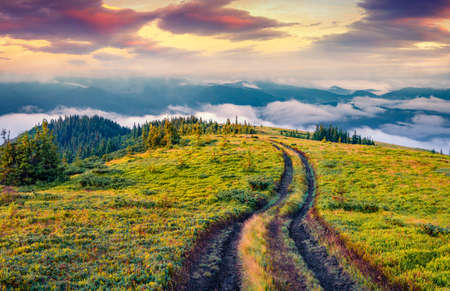 Old country road on Breska valley. Exciting summer view of Carpathian mountains, Ukraine, Europe. Beauty of nature concept background. 免版税图像