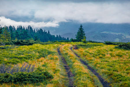 Dramatic morning scene of mountain valley with old country road and lonely fir tree. Wonderful summer scene of Brailka valley, Carpathian mountains, Ukraine. Beauty of nature concept background.
