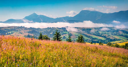 Two highest mountains in Carpathians - Hoverla and Petros in the morning mist. Sunny summer scene of mountain valley, Yasinya location, Ukraine, Europe. Beauty of nature concept background.