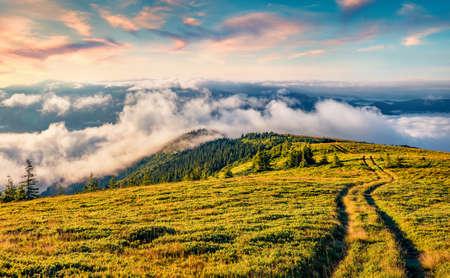 Old country road on Breska valley. Stunning summer scene of Carpathian mountains, Ukraine, Europe. Beauty of nature concept background. 免版税图像