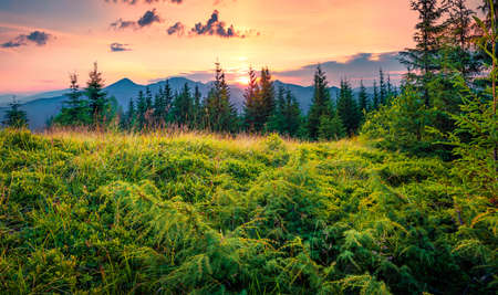 Sunset on Yahidna mount with the sun rolls over the mountain ranges. Amazing summer view of Carpathian mountains, Ukraine, Europe. Beauty of nature concept background.
