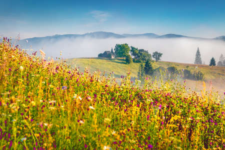 Amazing summer view of Carpathian Mountains with field ob blooming flowers. Bright morning scene of Stebnyi village, Transcarpathians, Ukraine, Europe. Beauty of nature concept background.