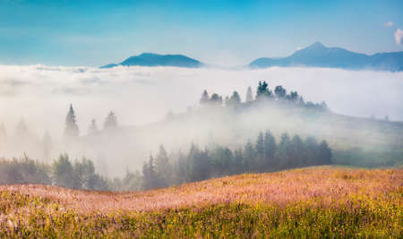 Foggy mountain slopes ang hills in Carpathian mountains, Yasinya location, Ukraine, Europe. Sunny summer scene of mountain valley. Beauty of nature concept background. 免版税图像
