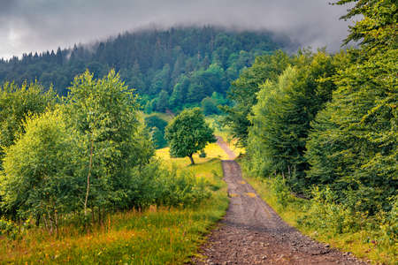 Old country road in the foggy mountain. Attractive summer scene of outskirts of Kvasy village, Carpathians, Ukraine. Colorful morning view of mountain forest.