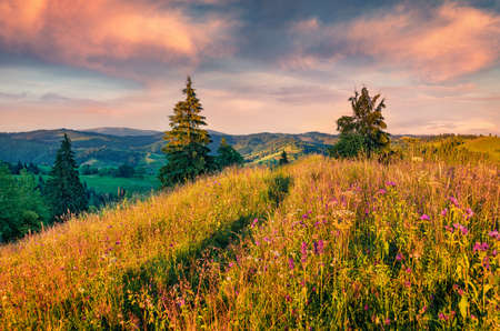 Bright summer evening on the mountain valley. Magnificent morning scene of Carpathian mountains with fields of blooming flowers, Ukraine, Europe. Beauty of nature concept background. 免版税图像