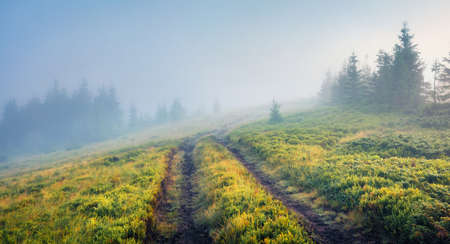 Captivating morning scene of mountain forest with old country road. Mystical summer scene of Brailka valley, Carpathian mountains, Ukraine, Europe. Beauty of nature concept background. 免版税图像