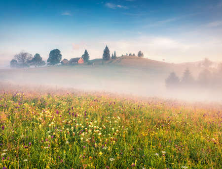Captivating summer view of Carpathian Mountains with field ob blooming flowers. Spectacular morning scene of Stebnyi village, Transcarpathians, Ukraine, Europe. Beauty of nature concept background.