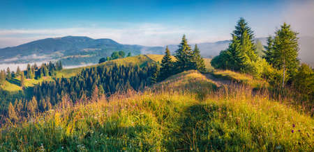 Lush grasses and flowering fields on the slopes of the Carpathian Mountains. Misty morning scene of the Stebnyi village, Transcarpathians, Ukraine, Europe. Beauty of countryside concept background. 免版税图像