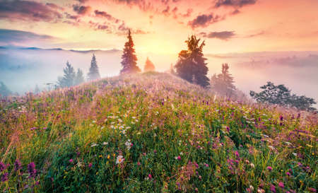 Unbelievable summer sunrise on the mountain valley. Colorful morning scene of Carpathian mountains with fields of blooming flowers and fresh green grass, Ukraine, Europe.