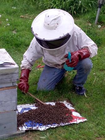 Beekeeper in action Stock Photo