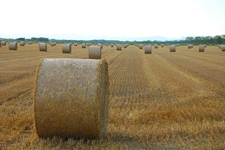 Round hay bales drying in a northern Italian field. The focus is on the foreground bale  photo