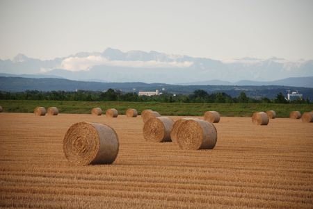 Round hay bales drying in a northern Italian field. The focus is on the foreground bale, and the shot is taken early evening when the sun is low in the sky  photo