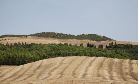 The dry, brown landscape of the interior the Puglia region of southern Italy. The field has been intentionally burnt to clear grasses, giving it a characteristic striped look Stock Photo - 3791440