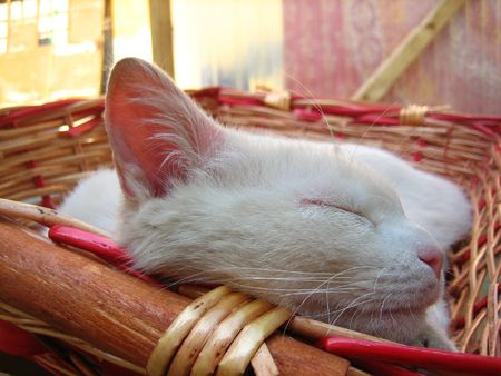 A young white cat blissfully asleep in a basket Фото со стока - 116848806
