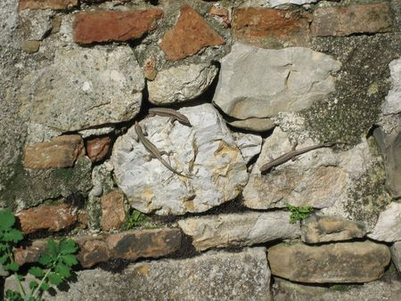 bask: Three small lizards bask on a stone wall in the midday sun  Stock Photo