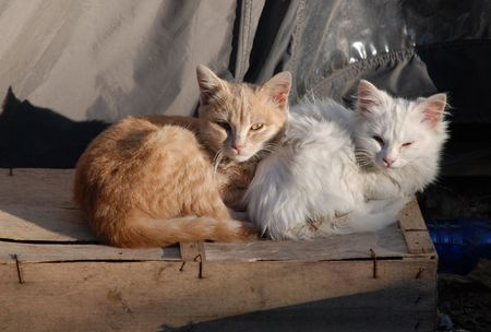 Two young kittens - a ginger brother and white sister - sit together in winter enjoying the warmth of the last sun of the day