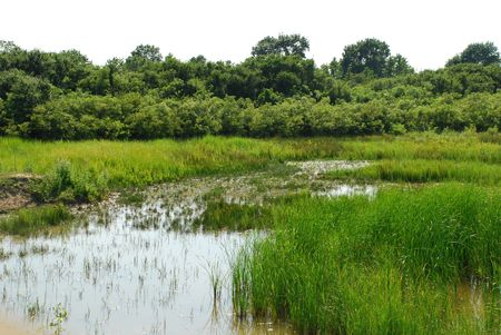 wetland conservation: The Isonzo Wetland Nature Reserve conservation park in Friuli, Italy, where over 300 species of birds visit