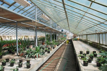hot house: A hot house filled with plants which thrive in a hot, humid environment.
