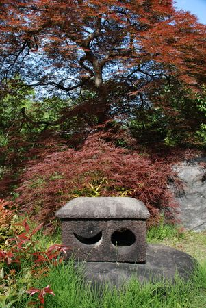 A Bloodgood Japanese Maple in Koko-En (Nishi-Oyashiki-Ato) Gardens in Himeji, Kansai, Japan  Stock Photo