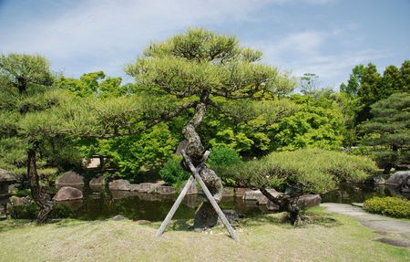 supported: A tree supported by wooden poles at Koko-En (Nishi-Oyashiki-Ato) Gardens in Himeji, Kansai, Japan