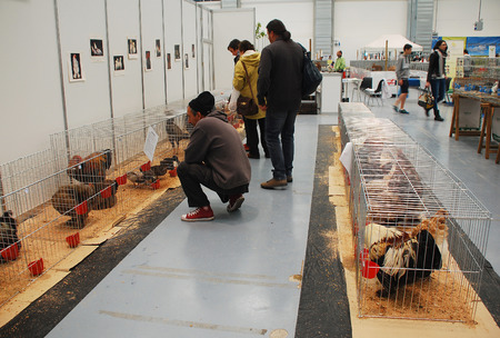 Gorizia, Italy - April 5th 2014  Customers admire poultry on display and sale at the annual Pollice Verde gardening exhibition  The unusual varieties on show include Silkies and Padovanas