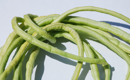 vigna: A bundle of Vigna Unguiculata Sesquipedalis bean pods � these annual beans are also known as yardlong bean, bora, long-podded cowpea, asparagus bean, pea bean,  snake bean and Chinese long bean  Stock Photo
