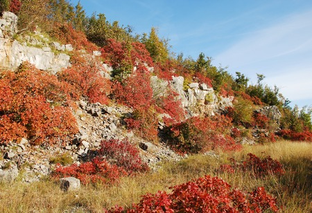 enriched: Autumn colours on display in the Carso (Karst) area of Friuli, north east Italy. The colours are enriched by the low afternoon sun on a perfect blue sky day.
